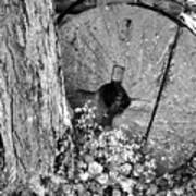 An Old Mill Stone Ely's Mill Roaring Fork Bw Art Print