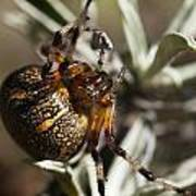 Arachnophobia Art Print