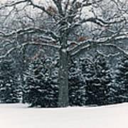 As The Snow Flies Art Print