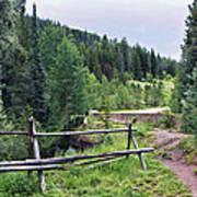 Aspen Trees In Vail - Colorado Art Print