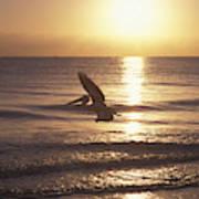 Australian Pelican Glides At Sunrise Art Print