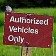 Authorized Vehicles Only Art Print