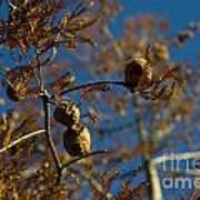 Autumn Coniferous Art Print