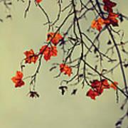 Autumn Art Print by Diana Kraleva