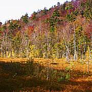 Autumn In The Adirondacks Art Print