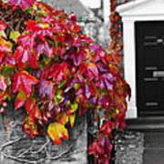 Autumn Ivy Art Print