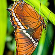 Autumn Leaf Butterfly Art Print