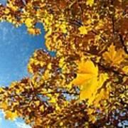 Autumn Splendor 9 Art Print