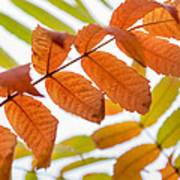 Autumn Upshot Art Print