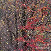 Autumn's Palette Art Print