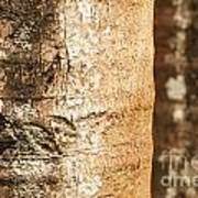 Bark Of A Tree Art Print