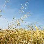 Barley And Oat Vertical Art Print