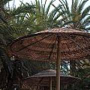 Beautiful Beach With Palm Trees Art Print