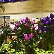 Beautiful Flowers Inside The Changi Airport In Singapore Art Print