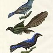 Beautiful Foreign Birds Art Print