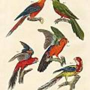 Beautiful Parrots Art Print