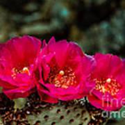 Beavertail Cactus Art Print