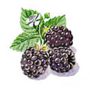 Artz Vitamins Series The Blackberries Art Print