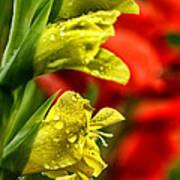 Blossom With Raindrops Art Print