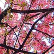 Blossoms And Bark Art Print