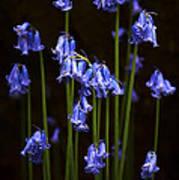 Blue Bells Art Print