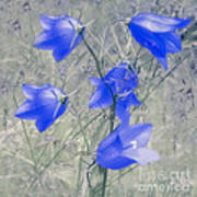 Bluebells Art Print by Sylvia  Niklasson