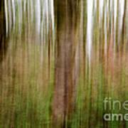 Blurred Trees Art Print