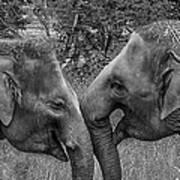 Blushing Elephants Art Print