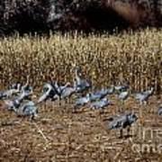 Bosque Del Apache New Mexico-sand Cranes V3 Art Print