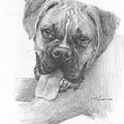 Boxer Dog Pencil Portrait Art Print