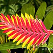 Bromeliad Blossom - Tillandsia Art Print