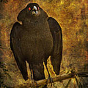 Bronzed Cowbird Art Print