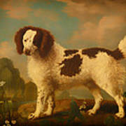 Brown And White Norfolk Or Water Spaniel Art Print