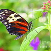 Butterfly On Bush Art Print