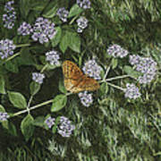 Butterfly On Oregano Art Print