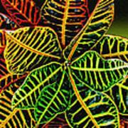 Cadiaeum Crotons Tropical Houseplant Shrub Art Print