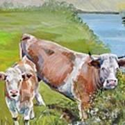Cow And Calf Art Print