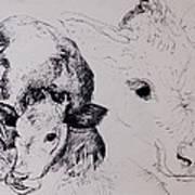 Calves, Gt Garnetts II Pen & Ink On Paper Art Print