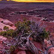 Canyonlands Sunrise Landscape With Dry Art Print