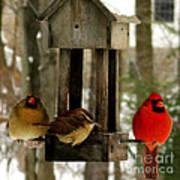 Cardinals And Carolina Wren Art Print