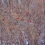 Cardinals Galore Art Print