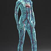 Cardiovascular System Female Art Print