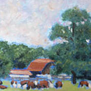 Carrboro Cattle Art Print