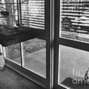 Cat Crying Print by Lynn Lennon