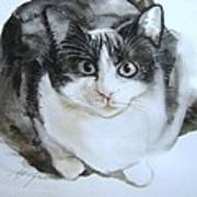 Cat In Black And White  Art Print