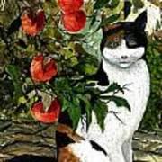 Cat On The Patio Art Print