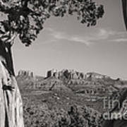Cathedral Rock Framed By Juniper In Sedona Arizona Art Print