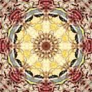 Cecropia Sun 4 Art Print