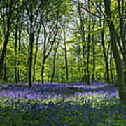 Chalet Wood Wanstead Park Bluebells Art Print