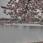 Cherry Blossoms - Washington Dc - 011336 Art Print